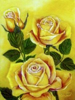 Yellow rose the first